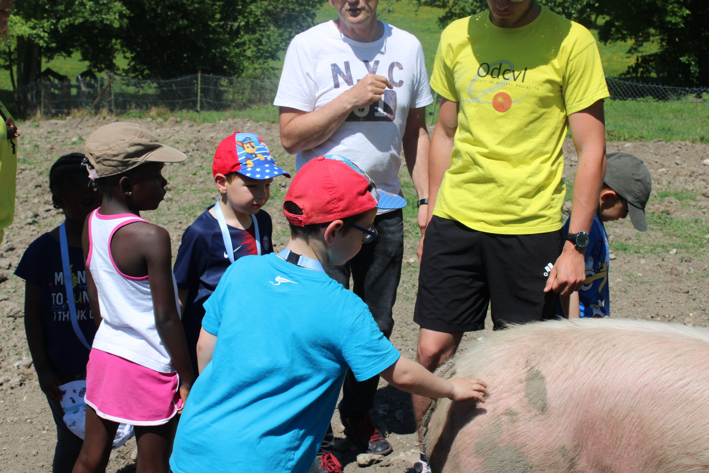 Enfants regardant les cochons manger