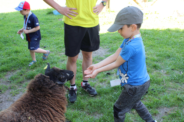 Enfant donnant à manger au mouton