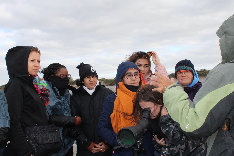 Observation des phoques de Cayeux-sur-Mer