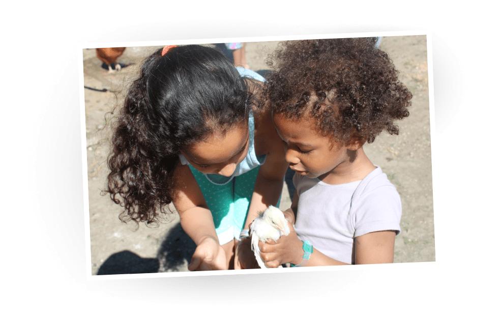 Petites Envolotes s'occupant d'un poussin